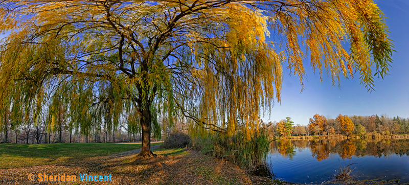Seneca Pond Willow by Sheridan Vincent