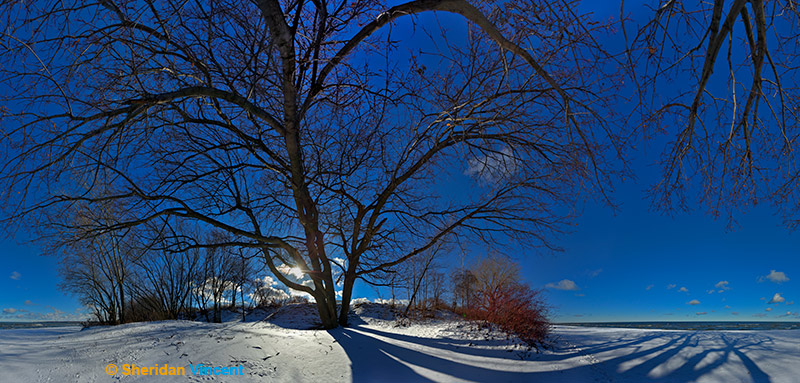 Shadows and Snow by Sheridan Vincent